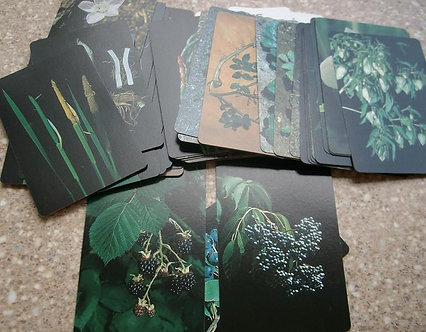 Edible Plant ID Cards-West US