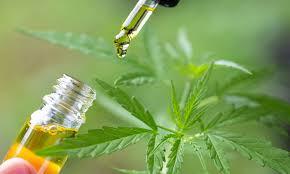 Cannabis: il CBD non è stupefacente secondo la Corte di giustizia dell'UE