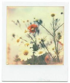 Daisy Mae Polaroid Inspiration