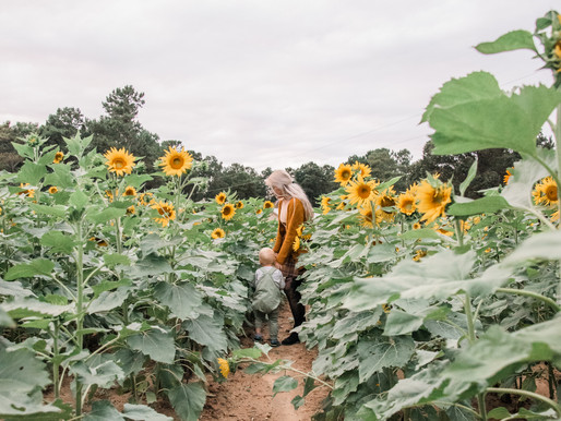 In the field of Sunflowers