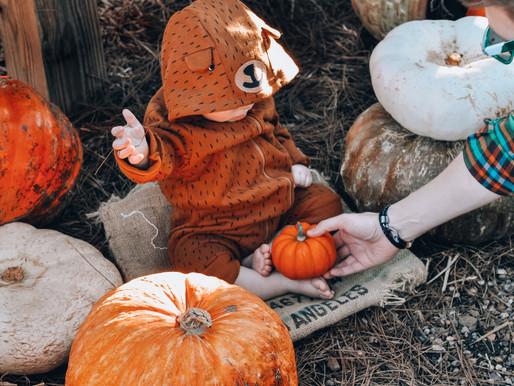 Fall Pumpkin Patch Pt. 1
