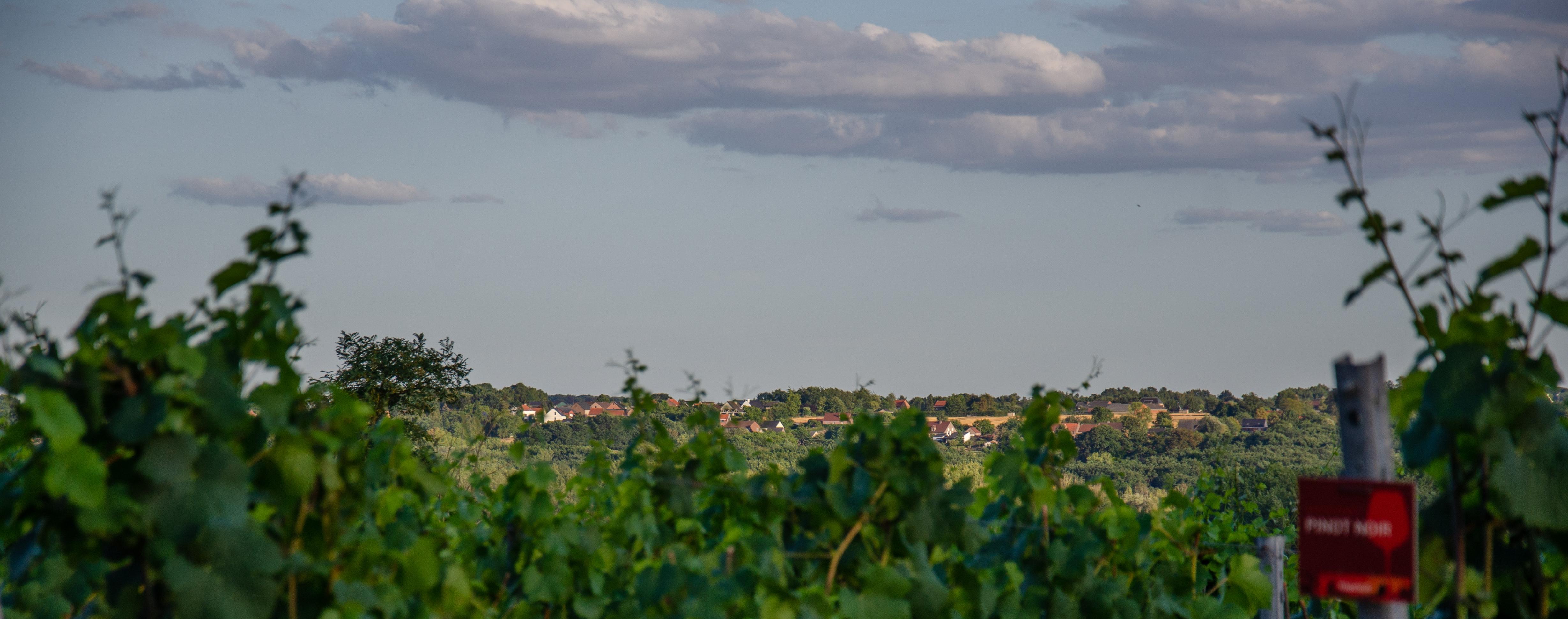 Zicht vanop de wijngaard