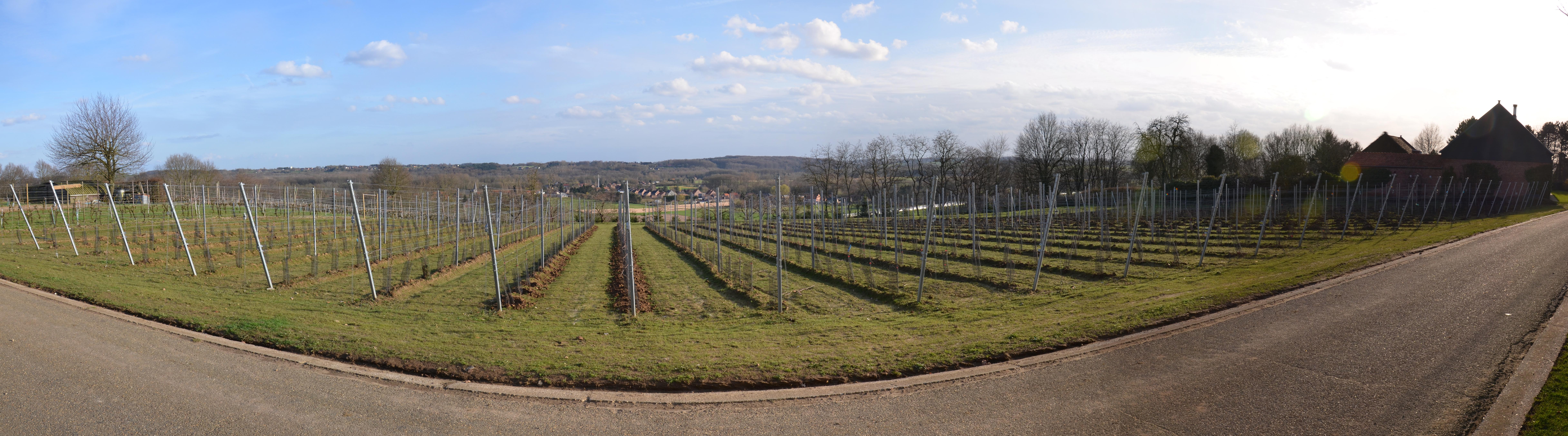 Overzicht wijngaard