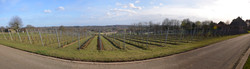 Panorama Wijngaard