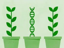 El comportamiento: ¿Es influido por ADN o por experiencias?-la ingenuidad de la mayoría