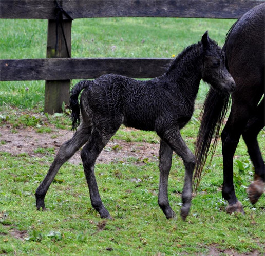 Fate as a Weanling