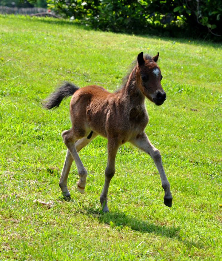 Candyman as a Weanling
