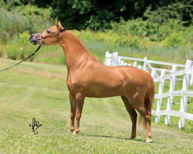 RHA Mustang Sally