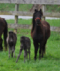Gordan and Fate Foals .jpg