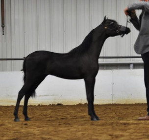 Fate as a Yearling