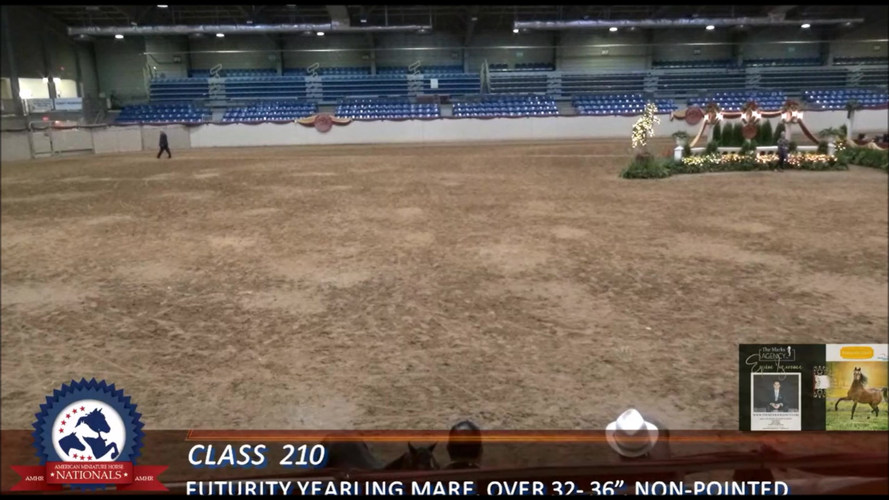 RHA Unique Autumn Tryst National Futurity