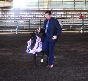 Senior Stallion