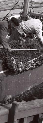 Des marins à la pêche
