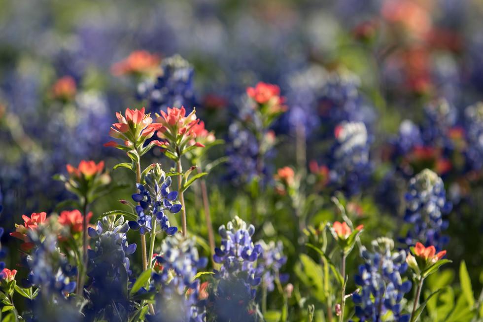 IMG_1977_Wildflowers_ArtsDrive_April_9_2