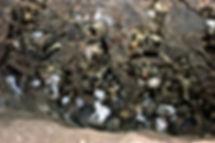 Sir Francis Drake treasure buried cavern ceiling greenbrae larkspur hanff von der porten crime Plate of Brass