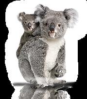 Aussie Drops - Australian Icon