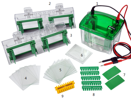 The difference between horizontal and vertical electrophoresis system