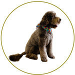 Dog - Full Grooming