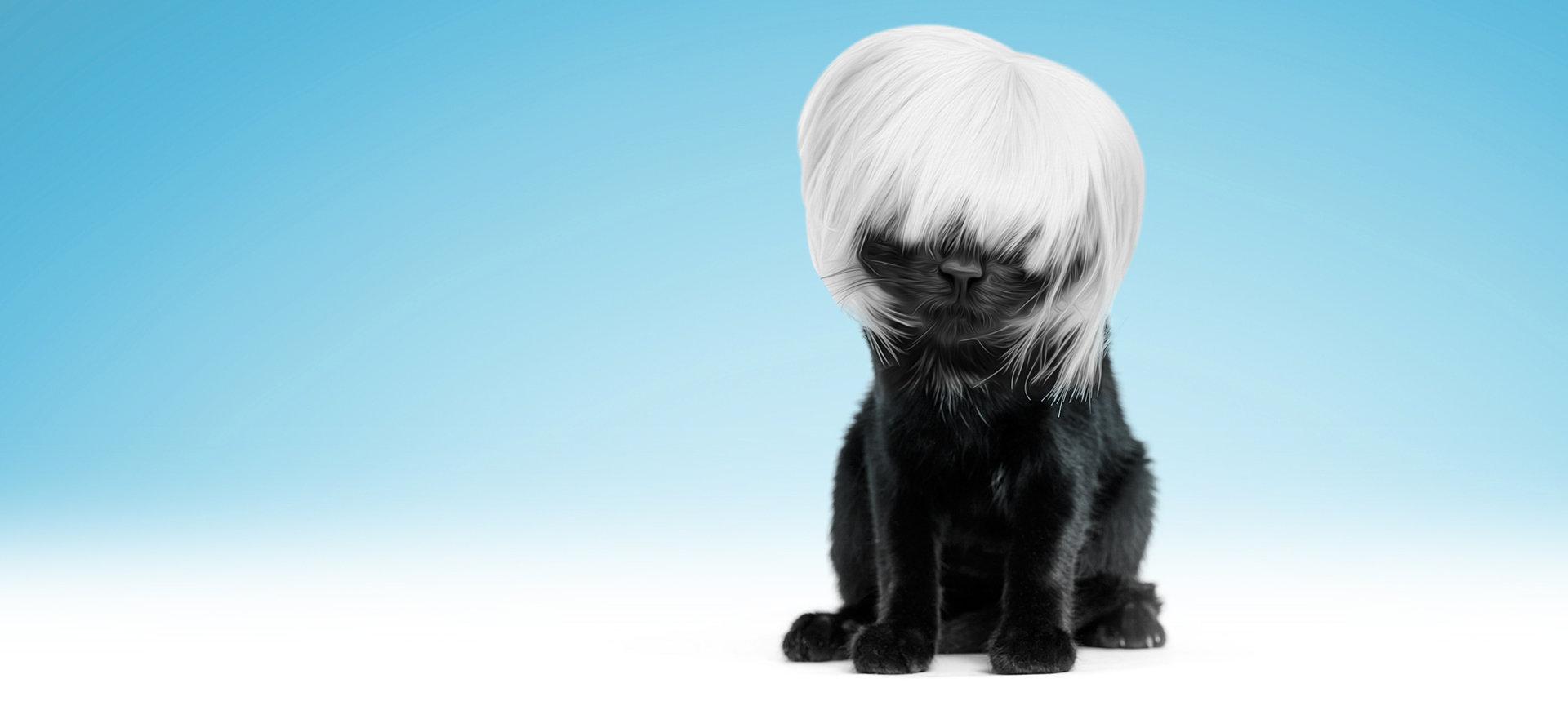 Cat - Full Grooming
