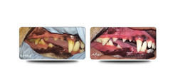 kokobone_dental_gallery2