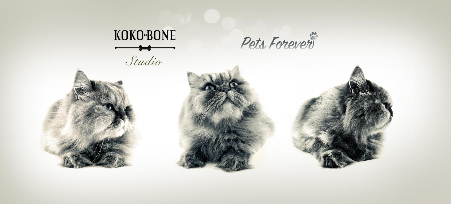 kokobone_gallery_3cats