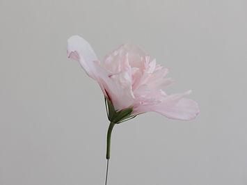 fiore rosa.jpg