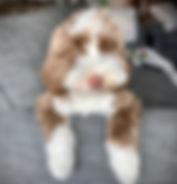Teddy 4 2012020.jpeg