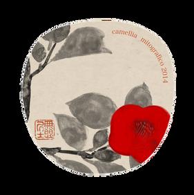 013 Camellia Fan