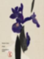 Hidetoshi Mito drawing 美登英利 ドローイング mitografico 菖蒲 iris