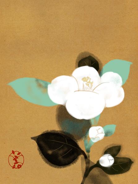 658 camellia