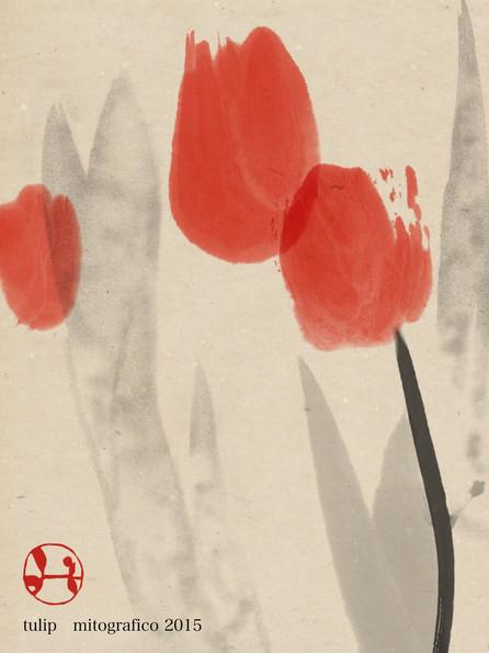 354 tulip