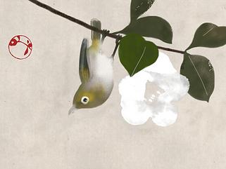 Hidetoshi Mito drawing 美登英利 ドローイング mitografico 椿 camellia 鴬