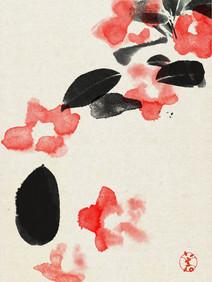 004 camellia