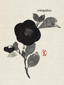 584 camellia