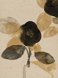 487-1 camellia