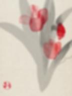 Hidetoshi Mito drawing 美登英利 ドローイング mitografico チューリップ Tulip