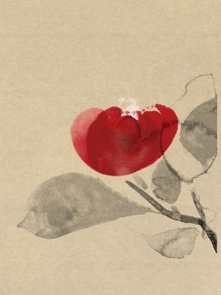 505 camellia