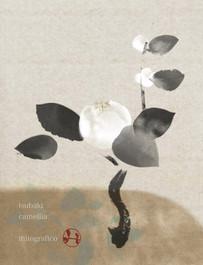 006 camellia