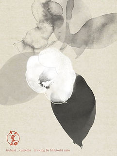 Hidetoshi Mito drawing 美登英利 ドローイング mitografico 椿 camellia