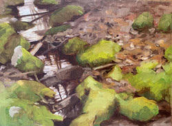 Cape Cod Creek
