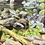 Thumbnail: Creek of Reflections