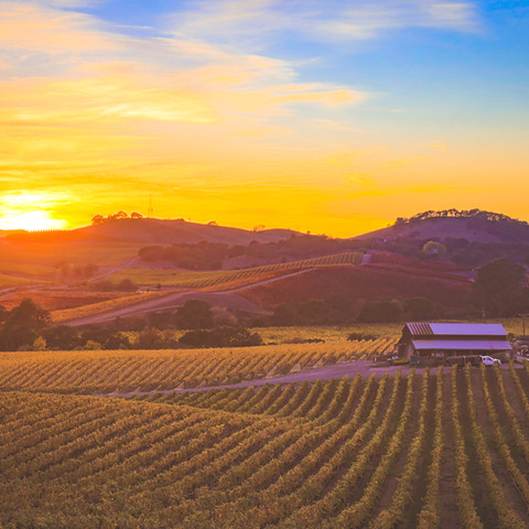 Napa Carneros District photographed by Michael Cuffe