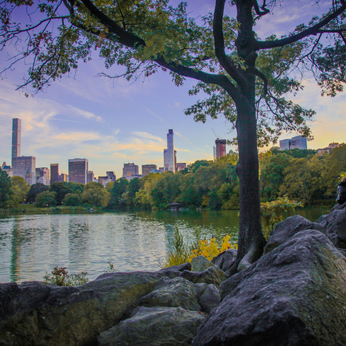 """""""Central Park"""" photographed by Michael Cuffe"""
