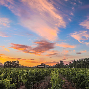 California's Napa Valley