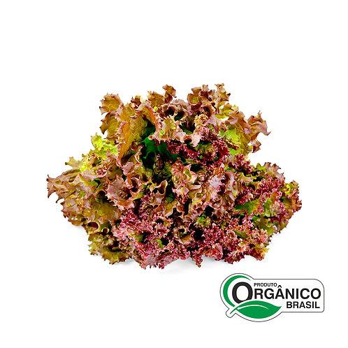 Alface Crespa Roxa Orgânica Semeares