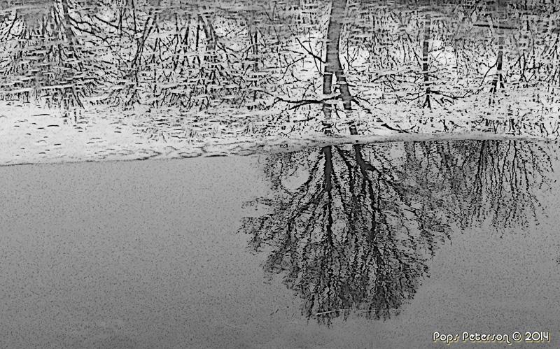 Tree in the Ice-BW.jpg