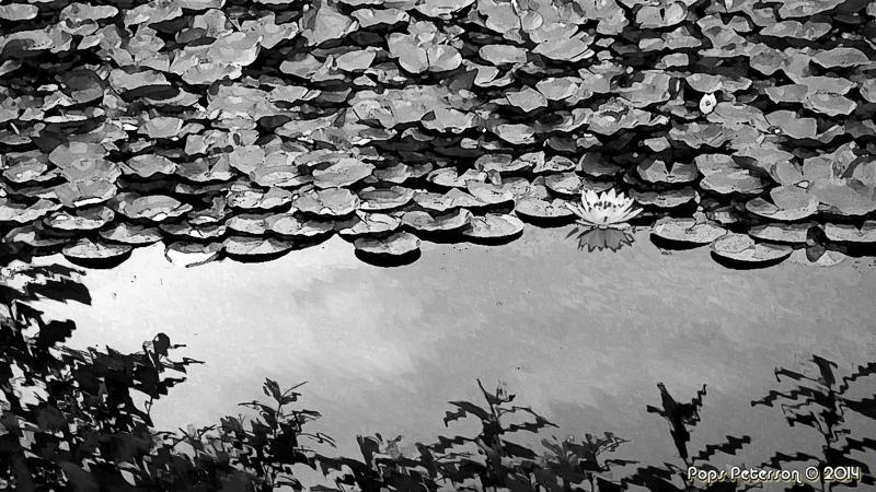 Lilypads of Kyoto-BW.jpg