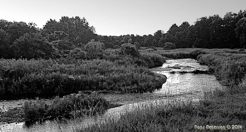 Williams River-bw.jpg