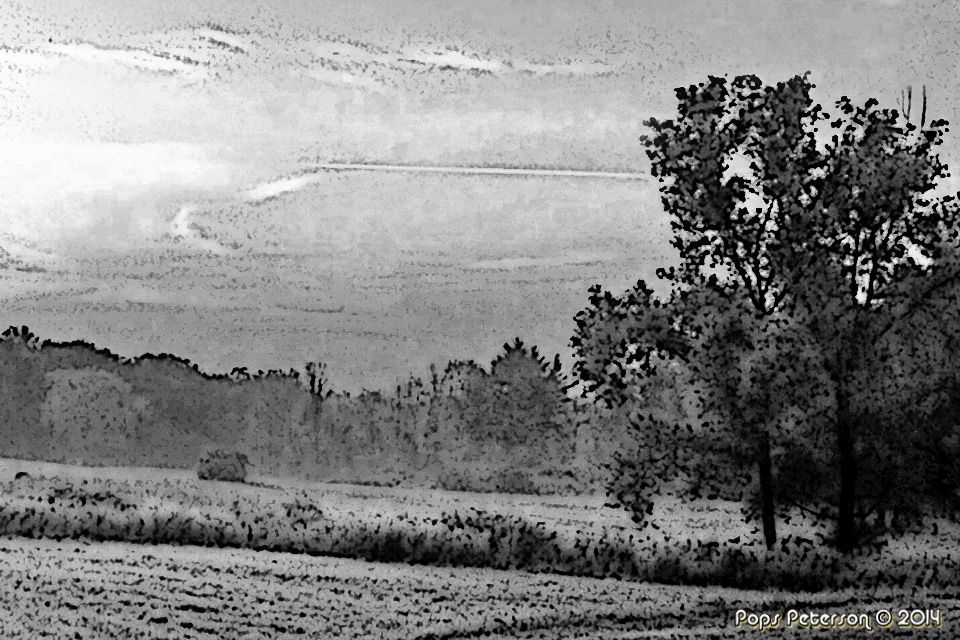Mysterious Meadow-bw