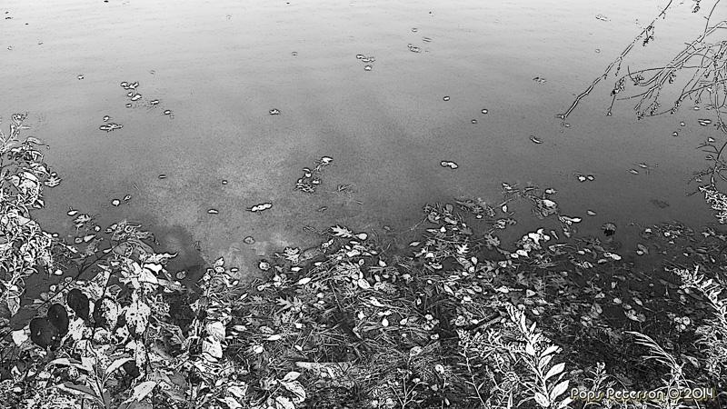 Leaves on a lake-BW.jpg
